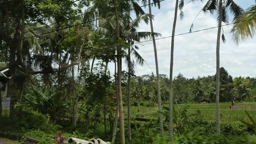 Bali-2-046