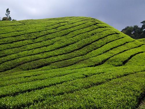 Gunung Brinchang, Cameron Highlands, Malaysia