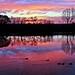 Río en el amanecer by Licy (Iris de Paz)