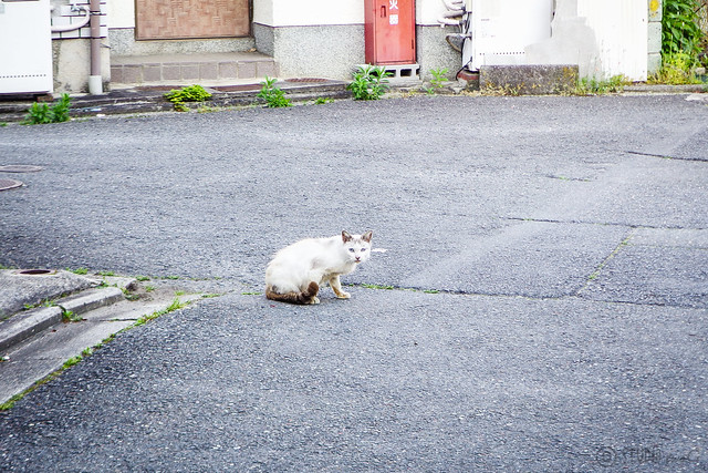 Today's Cat@2016-05-13