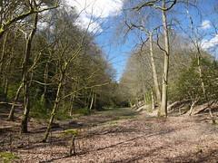 Durford Heath and Rogate Common