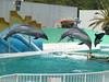 ドルフィンジャンプ イルカのショー