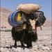 Loaded Yak, Mount Everest, Tibet