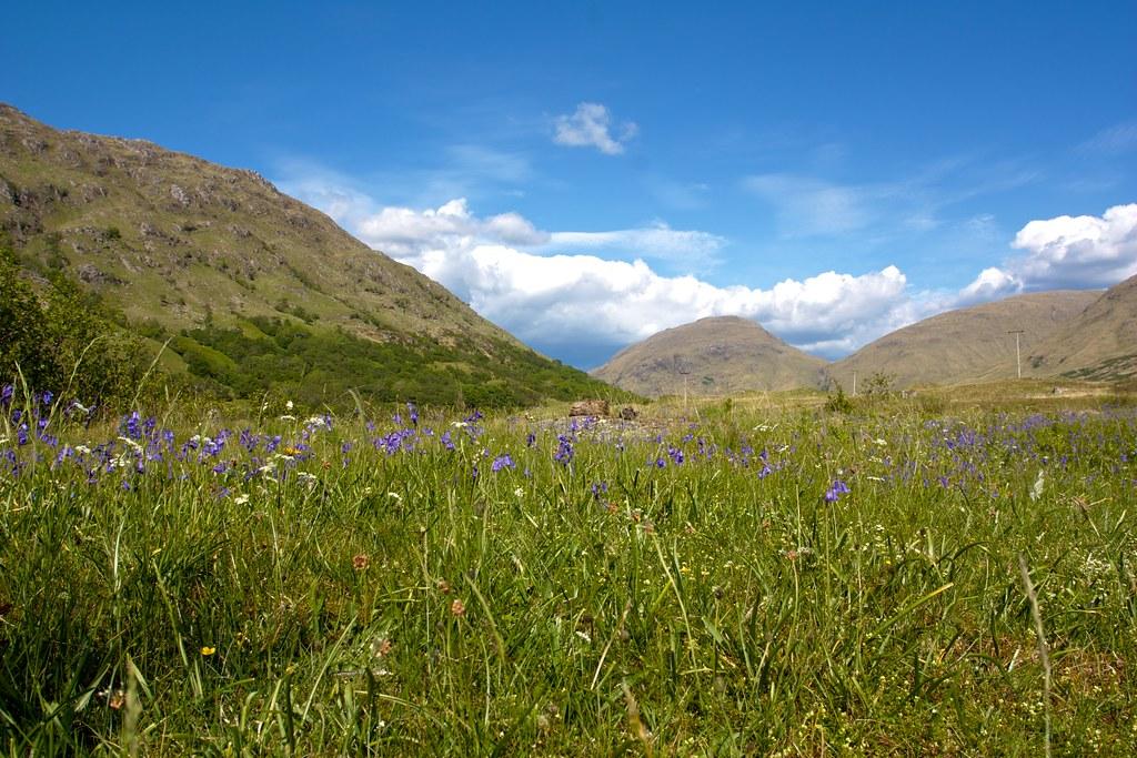 Bluebells in Glen Kinglass