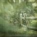morning green by jssteak