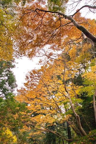【写真】2012 紅葉 : 祇王寺/2021-09-05/IMGP7851