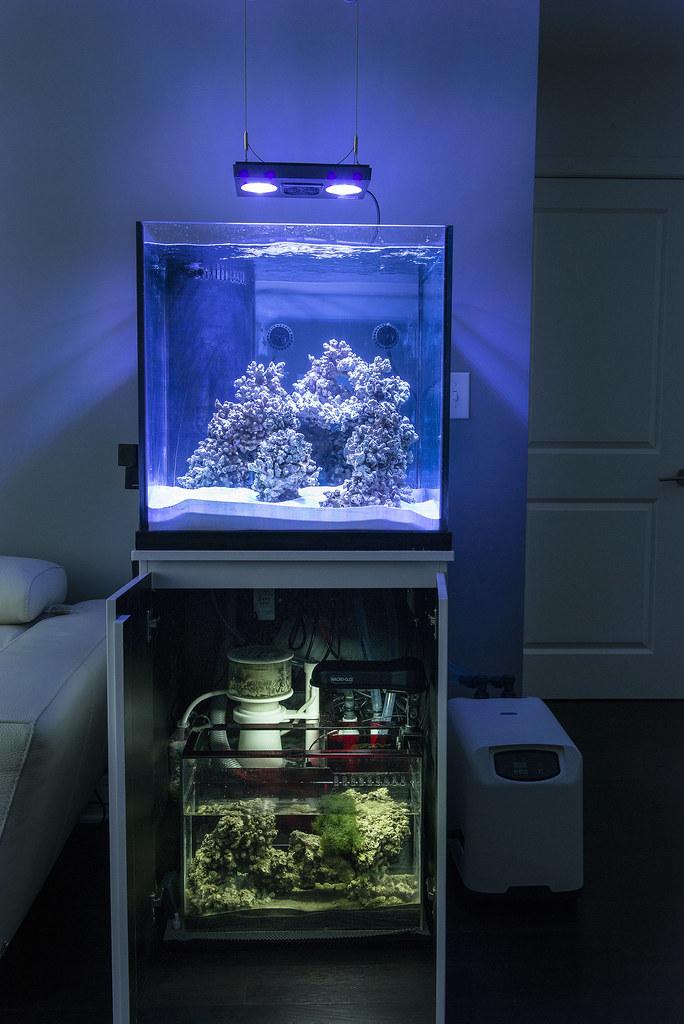 Rhoads238 S 60g Cube Tank 3reef Aquarium Forums