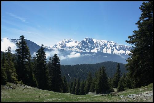 france nature paysage montagnes isère sapins