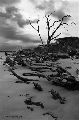 light beach clouds landscape blackwhite sand shadows florida driftwood jacksonville bigtalbotisland bigtalbotislandstatepark nikond5100