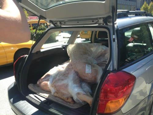 11 - Parish Hall - pigs loaded into car