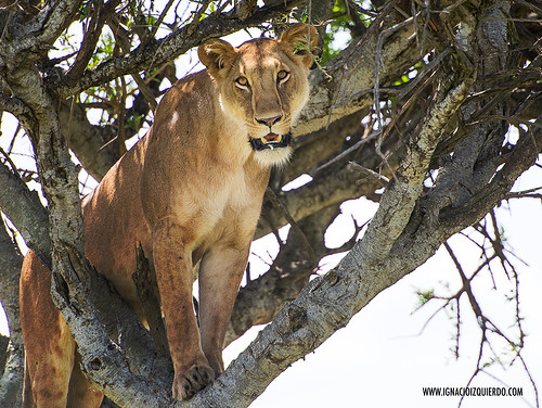 Kenia - Masai Mara 50