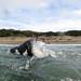 Swimming Baker Beach by neas