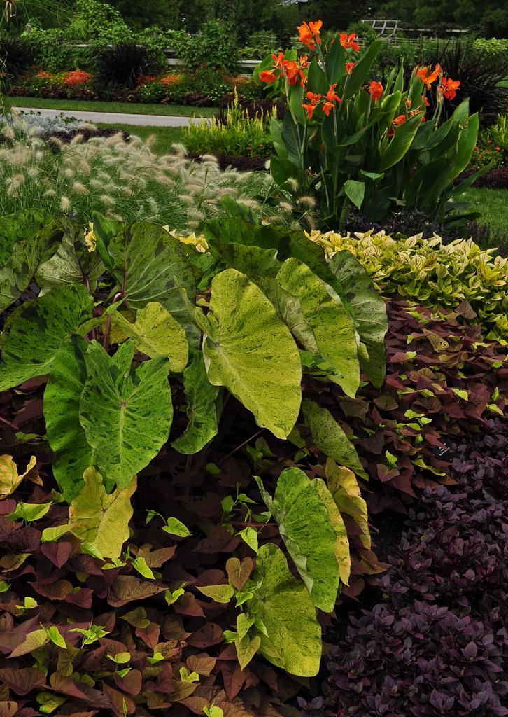 Idea Garden (6)