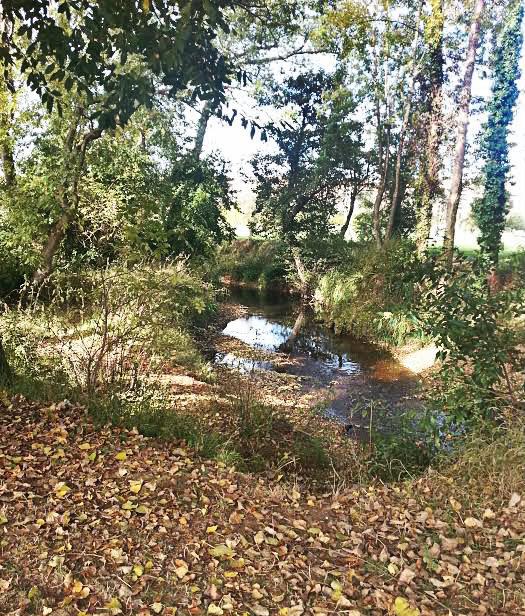 río_ojas