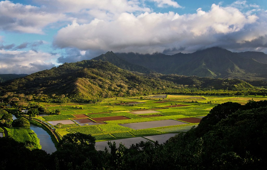 Taro fields in Hanalei Valley, Kauai