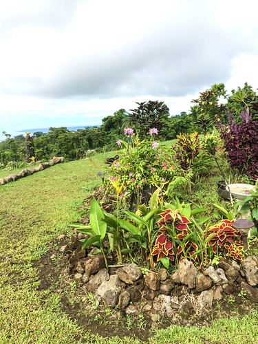 Lupe Sina Treesort gardens