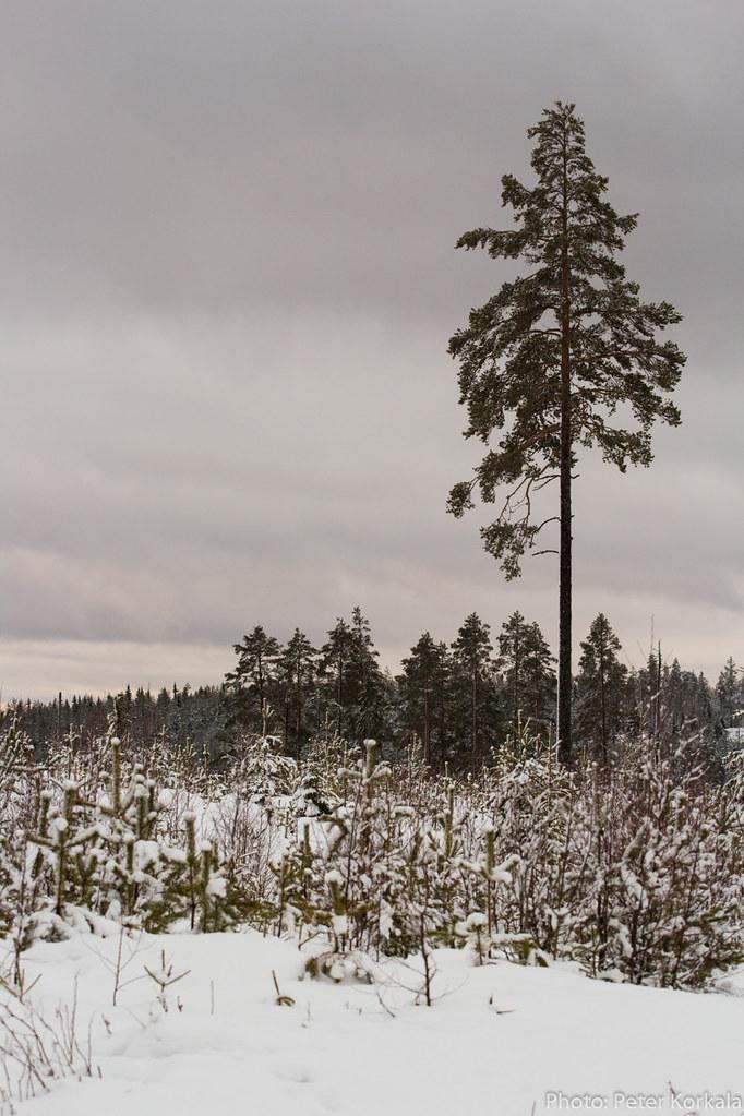 Skogen utanför Svabensverk