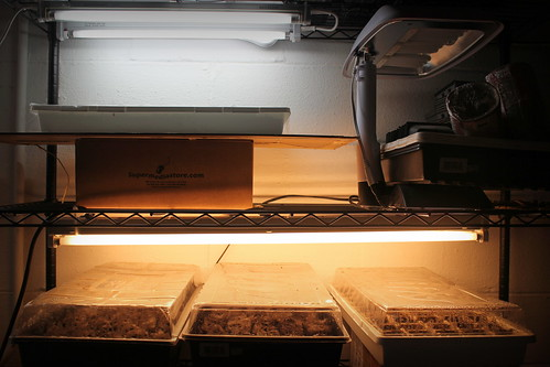 20140209. The seeds are planted! Our no frills growing setup.