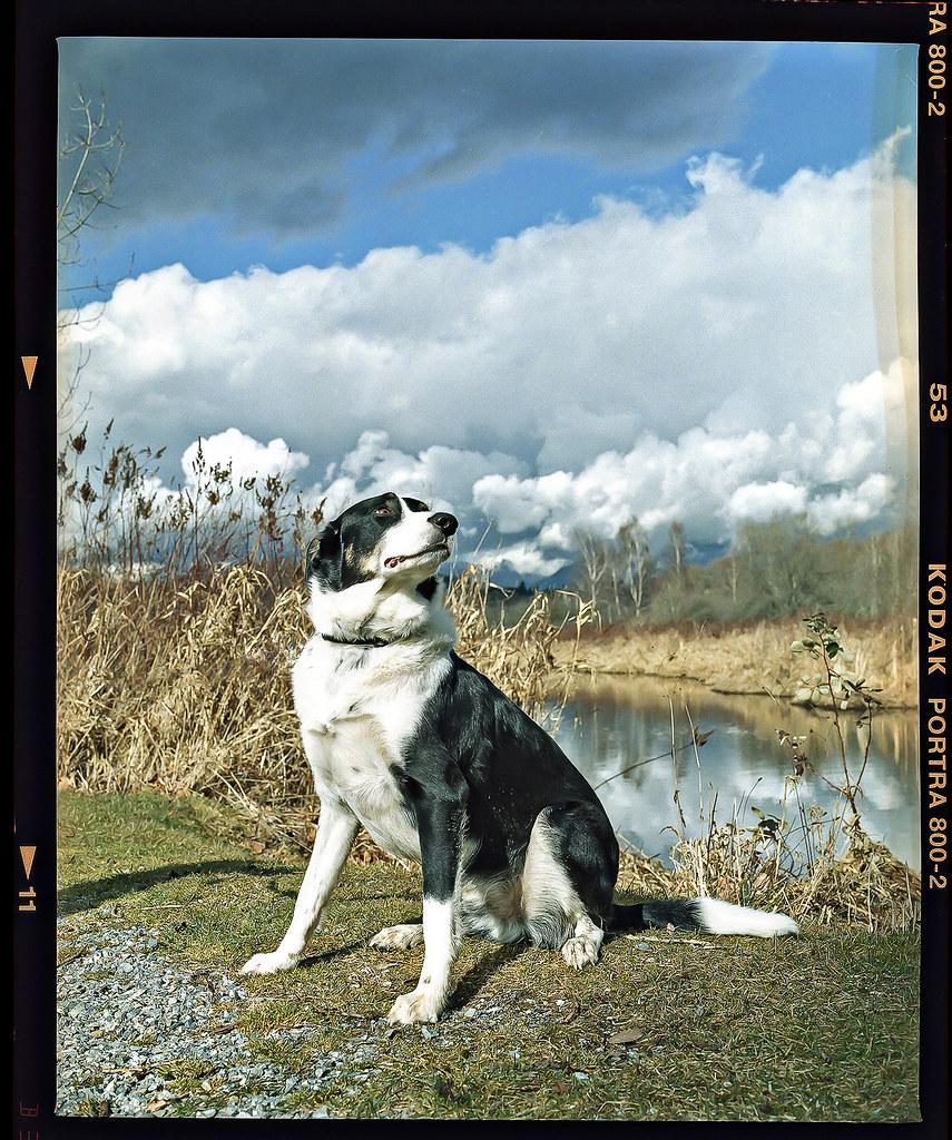 Kodak Portra 800 3.jpg
