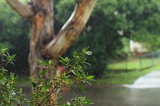 52 in 2014 3. Rain