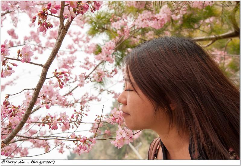 2014-3-01 拉拉山櫻花-26