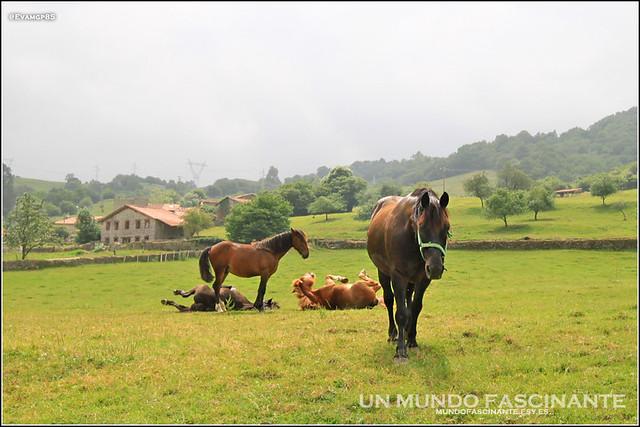 Panes, Asturias
