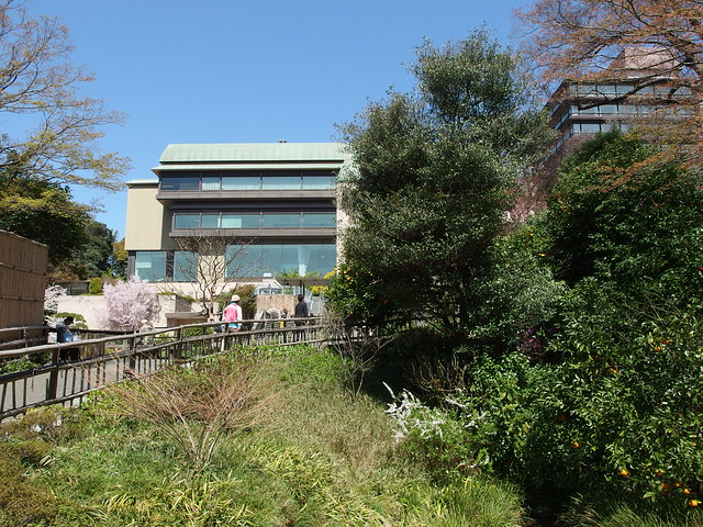 Cherry Blossoms Garden Of Hotel Chinzanso Tokyo Bunkyo