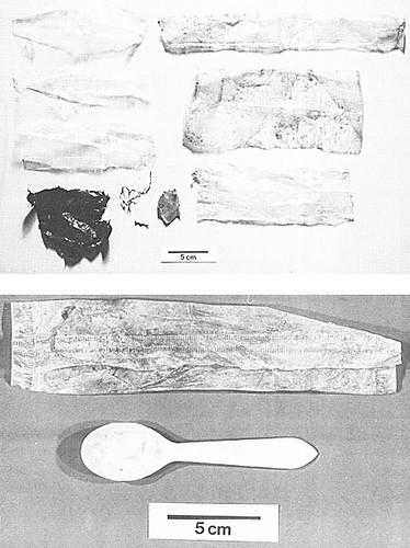 海龜誤食塑膠的早期研究照片