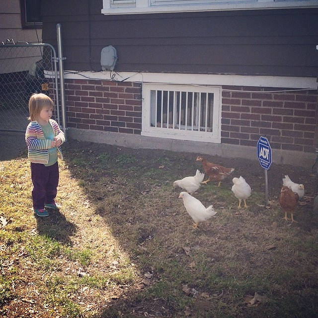 Maddy contemplates the chickens (at her friend Sasha's house)