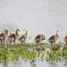 Seven in a Row by Peter Nijenhuis