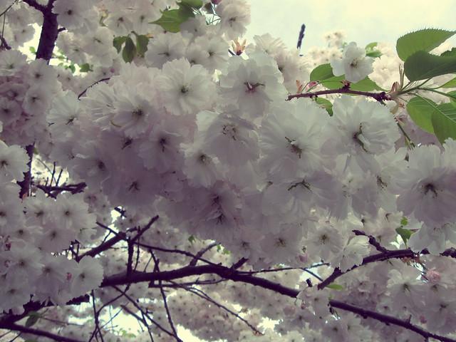 Blühwölkchen