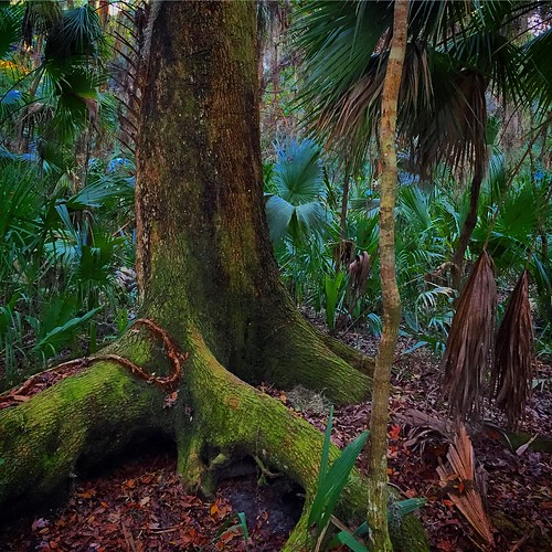 treerootsnaturefloridamossprehistoric