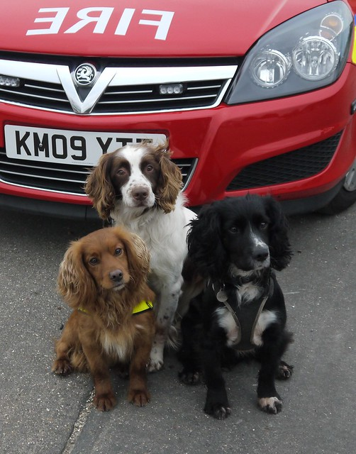 All three together - Murphy, Roscoe and Sherlock