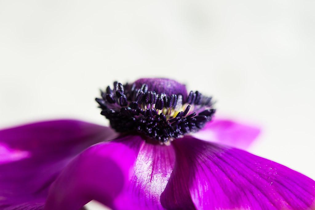 spring_flowers-20