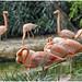 pelicano2 by CARLOS A.BETANCUR