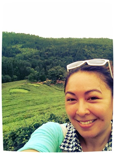 Boseong Tea Fields