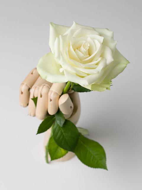 A Rose