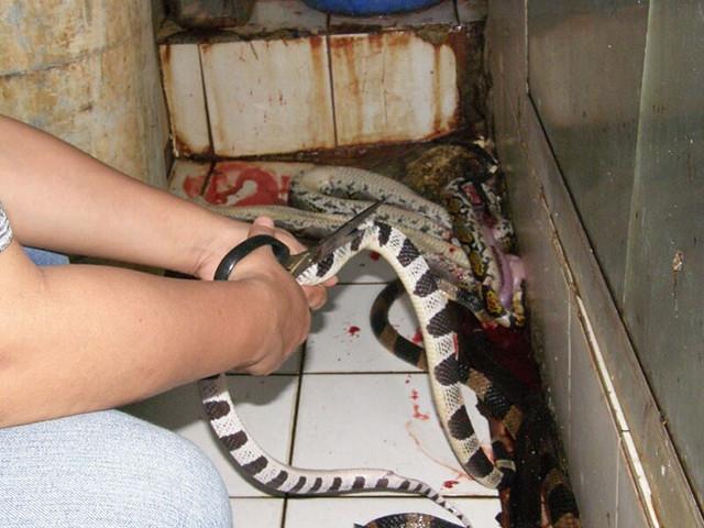 0001campana-anti-crueldad-animal-cuero-peta-asia-9