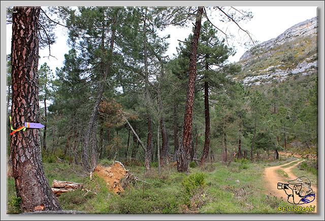 3 Ruta de los Duendes y Bosque encantado