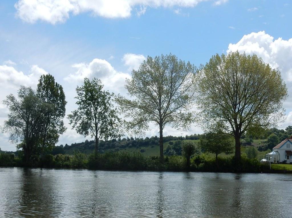 Trees Marlow Circular