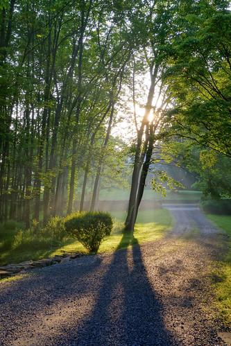 morning trees summer ny leaves sunrise spring hdr westchestercounty southsalem lewisboro sonydscrx100