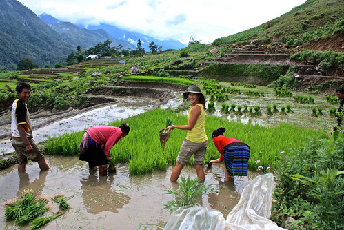 Lina helping some locals in Sapa pick rice