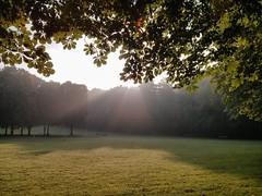 Morgendunst II