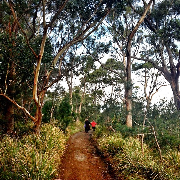 A walk with Nanny through coastal white gum forest. || #lovetassie