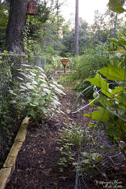 gardenview2
