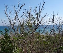 Cabo Delgado Province
