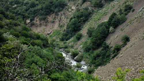 mountain tree river iran mazandaran chalousroad alborzrange
