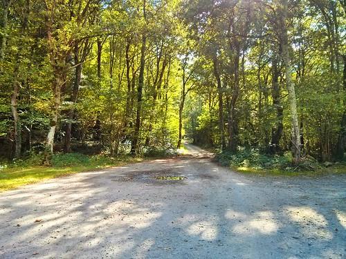 Montabliz forest