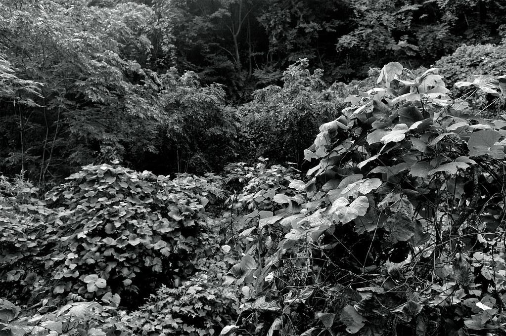 鬱蒼|石川県輪島市
