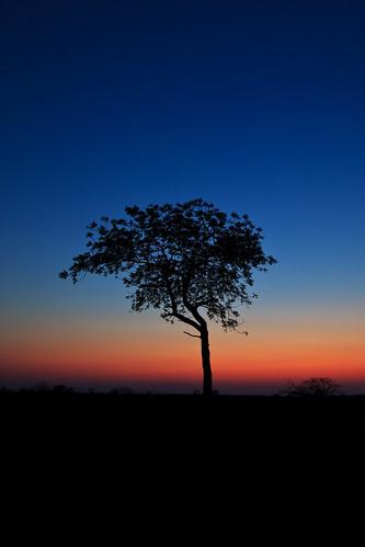 africa sunset tree silhouette landscape southafrica dusk safari afrika rsa mpumalanga gamedrive timbavati republicofsouthafrica motswari timbavatiprivatenaturereserve greaterkrugernationalpark motswariprivategamereserve